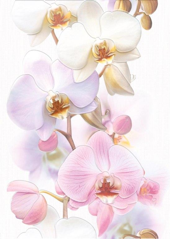 Tropicana декор Orchids<br>
